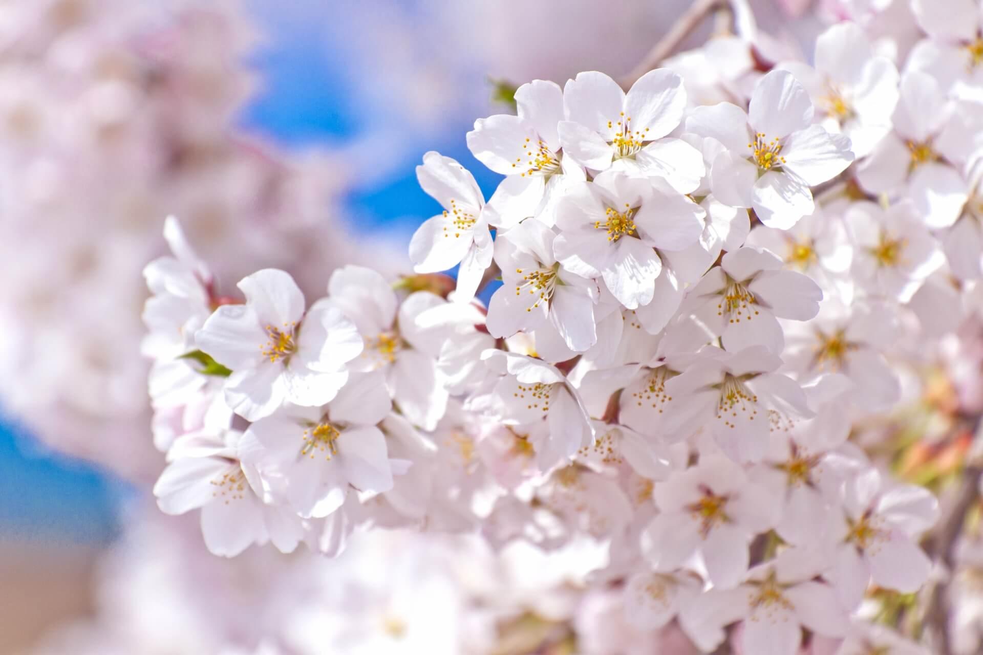 お花見スポット