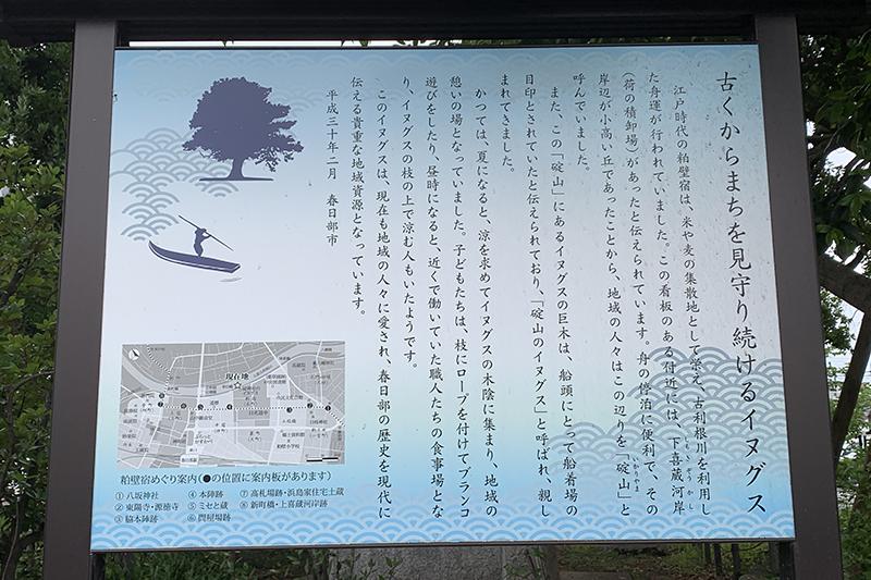 埼玉県指定天然記念物イヌグス